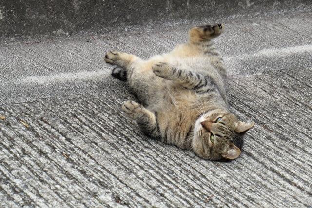 足を広げる猫