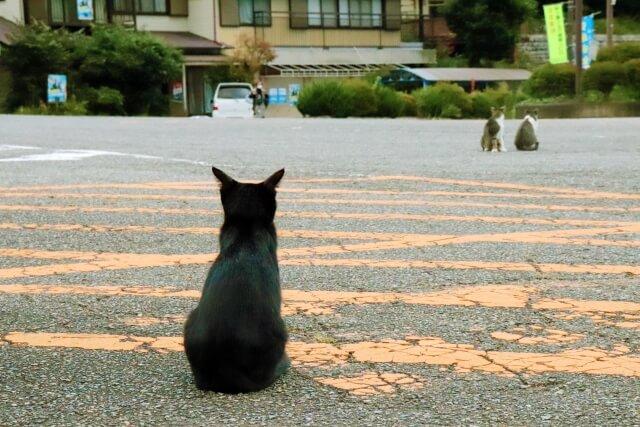 遠くを見つめる孤独な猫