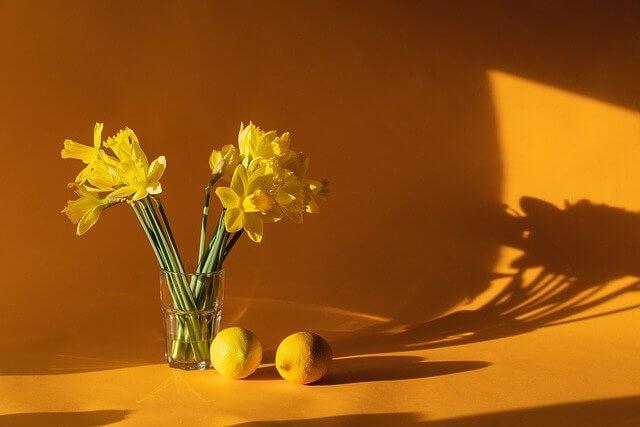 黄色い花とレモンの影